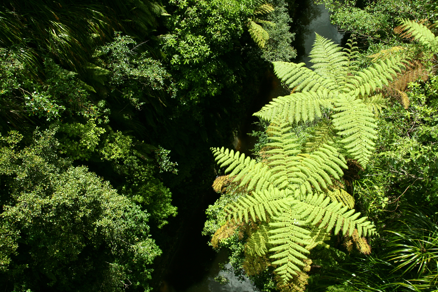 tree-ferns-whanganui-national-park