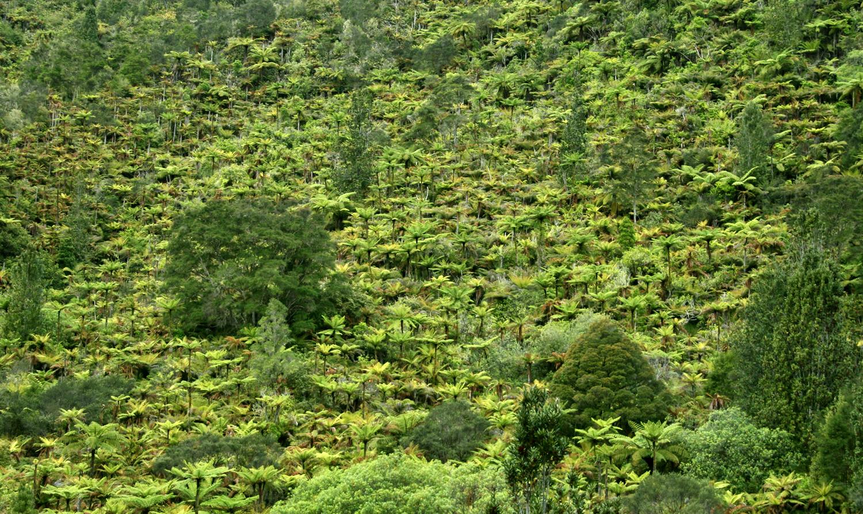 whanganui-national-park-bush